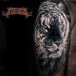 meilleure-tatoueuse-paris-barbara-rosendo-tatouage-tattoo-tigre-realiste